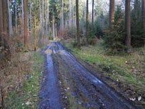 泥泞的林业路 免版税图库摄影