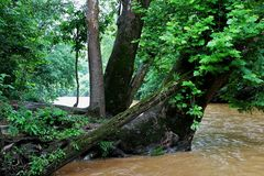 泥泞的河 免版税库存图片