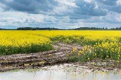 泥泞的油菜领域 免版税库存照片