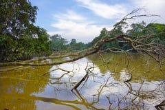 泥泞的热带河 免版税库存照片