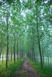 泥泞的窄路森林 免版税库存照片