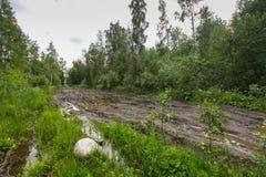 泥泞的肮脏的路通过有水坑的森林 库存照片