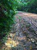 泥泞的自行车赛车道 库存照片