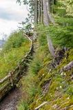 泥泞的艰难远足在阿拉斯加 免版税库存图片