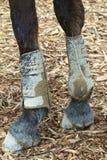 泥泞的英尺 库存照片