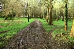 泥泞的路在公园 库存照片