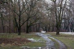 泥泞的路在冬天森林里 库存图片