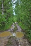 泥泞的路在桦树树丛里 免版税库存图片