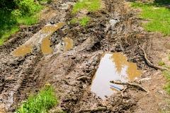 泥泞的路在森林里 免版税图库摄影
