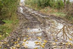 泥泞的路在森林里 库存图片