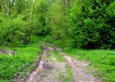 泥泞的路在森林里 库存照片