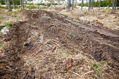 泥泞的路在森林里 免版税库存图片