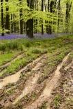 泥泞的路径春天 免版税库存图片