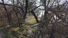 泥泞的道路向用下落的树和干植被盖的河岸 免版税库存图片