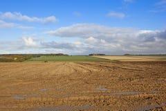 泥泞的领域在秋天 库存照片