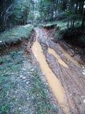 泥泞,色的道路在森林里 免版税库存图片
