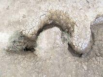 泥火山-纹理喜欢蛇 图库摄影