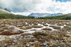 泥炭沼在火地群岛,Argenti 免版税库存照片