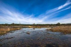 泥炭沼,爱沙尼亚 免版税库存照片