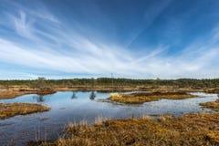 泥炭沼,爱沙尼亚 免版税库存图片