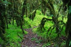 泥炭藓在雨林里在泰国 免版税库存图片