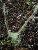 泥炭藓pukekohe流跟踪 库存照片