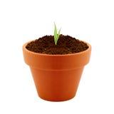 泥罐的年幼植物 免版税库存图片