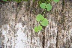 水泥背景的植物 免版税库存图片