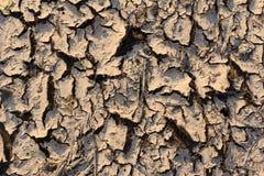 泥裂缝 免版税图库摄影