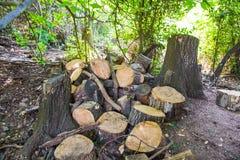 泥鳅长满的堆老森林 免版税库存图片