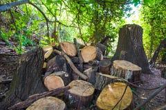 泥鳅长满的堆老森林 免版税图库摄影