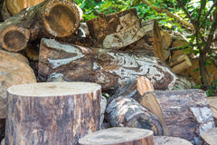 泥鳅长满的堆老森林 库存图片