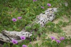 注册在泥鳅中的沙子 免版税库存图片