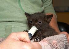 注射器哺养的小小猫 免版税库存照片