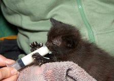 注射器哺养的小小猫 库存照片