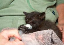 注射器哺养的小小猫 免版税库存图片