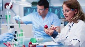 注射GMO的女性生物研究员入草莓 股票录像