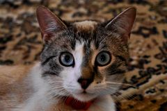 注意照相机的猫 库存照片