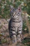 注意的猫 免版税库存照片