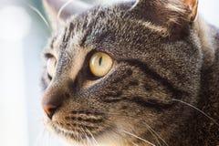 注意的猫 免版税图库摄影