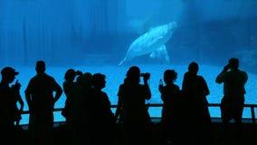 注意的鲸鱼 库存照片