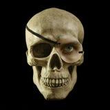 注视一块头骨 向量例证