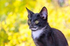 注视照相机的街道猫 免版税库存照片