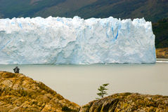 注视的冰川,佩里托莫雷诺 库存图片