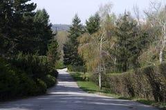 注视着冷杉和杉树上面反对与两朵小白色云彩的深蓝色夏天天空,离开室为文本 库存图片