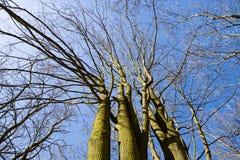 注视着叶茂盛树和天空上面的风景看法在森林里 库存图片