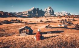注视着在草甸和山的年轻女人日落在秋天 图库摄影