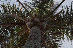注视着棕榈树上面 库存图片