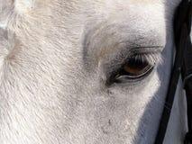 注视马 免版税图库摄影