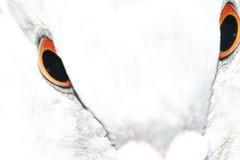 注视鸽子 免版税库存照片